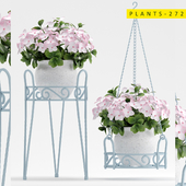 plants 272