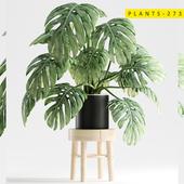 plants 273
