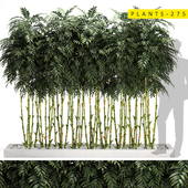 plants275