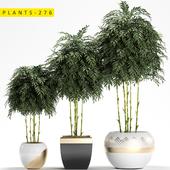 plants 276