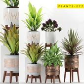plants 277