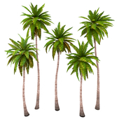 Palms low poly