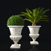 plant collection 05