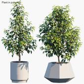 Plant in pots #60 : House plants