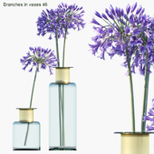 Branches in vases 46 : Agapanthus