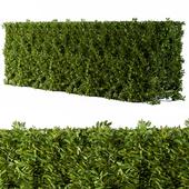Bush Broadleaf Wall - Cube Form