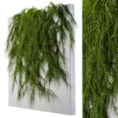 Ivy wall plants 03