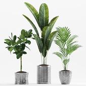 Plants 233