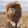 lion186