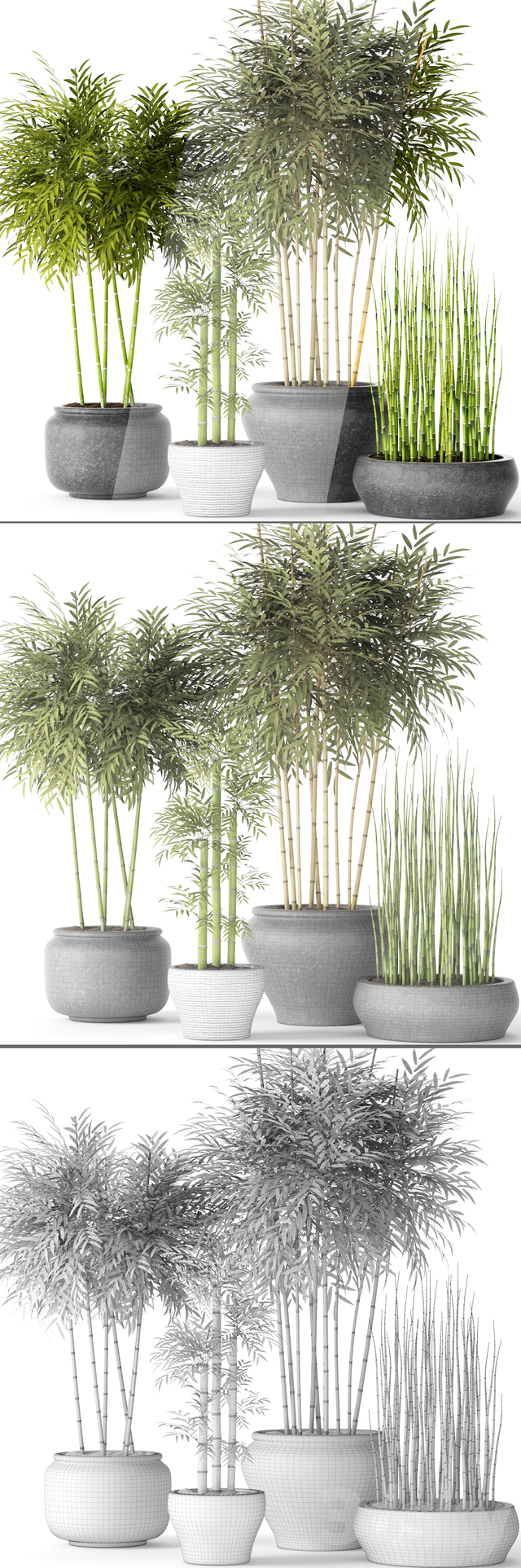 """3d models: Indoor - """"Contest"""" Bamboo and Equisetum"""