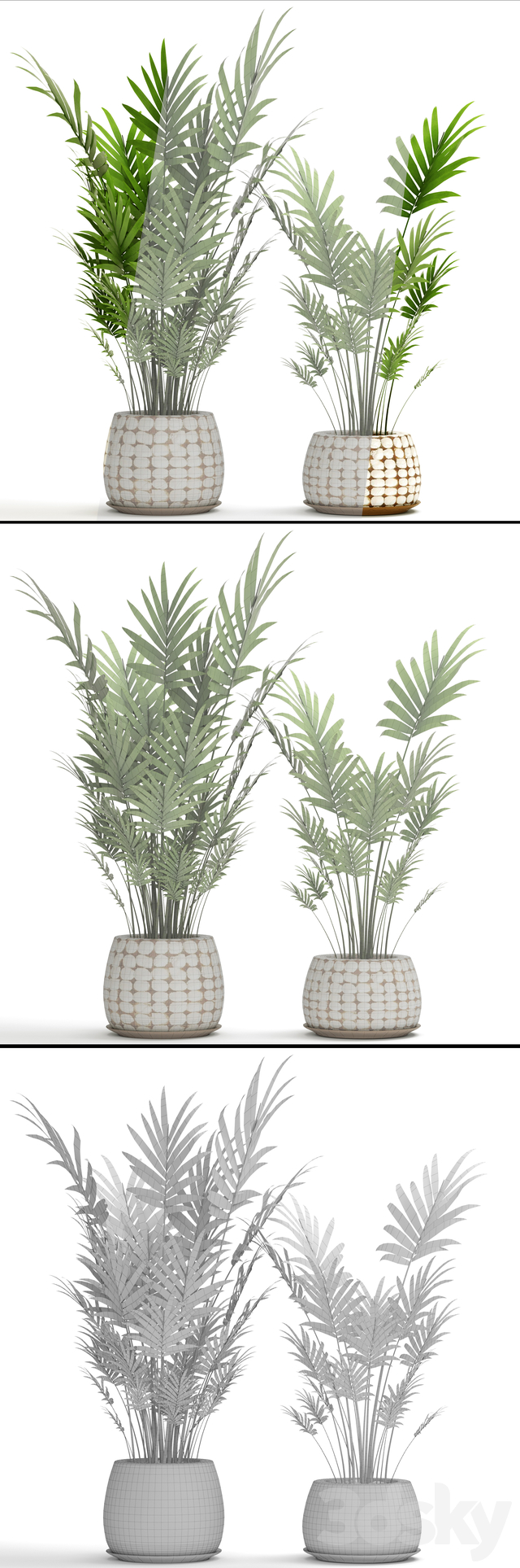 A collection of palms in pots 4