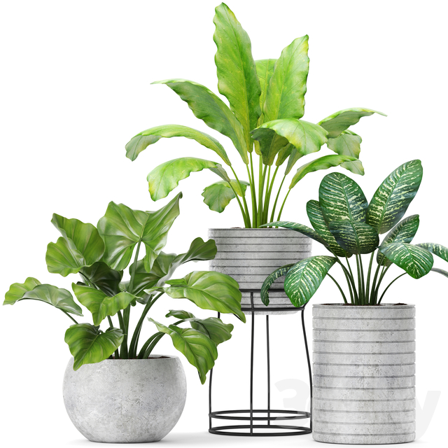 The collection of plants in pots 14