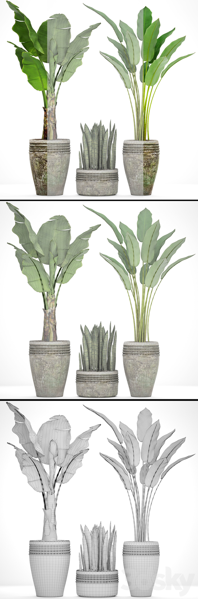 Collection of plants in pots 37