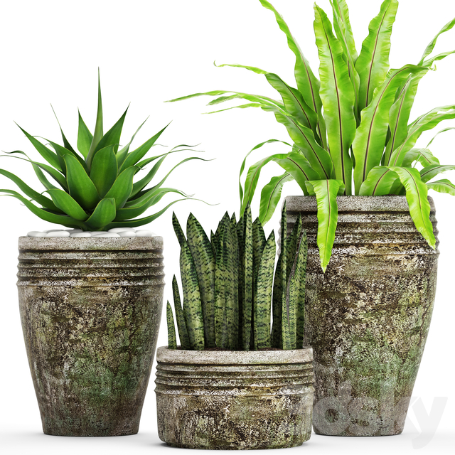 Collection of plants in pots 40
