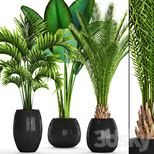 Collection of plants 93.