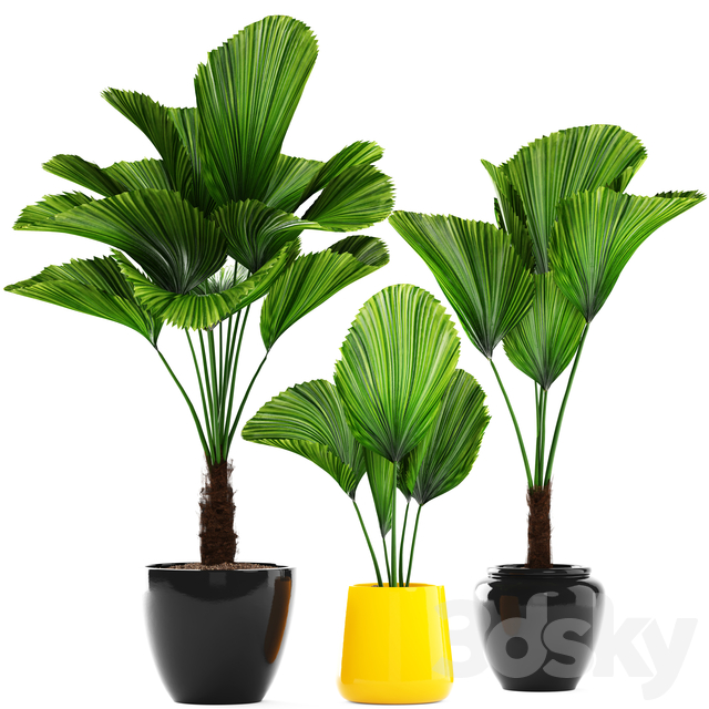 Collection of plants 113.