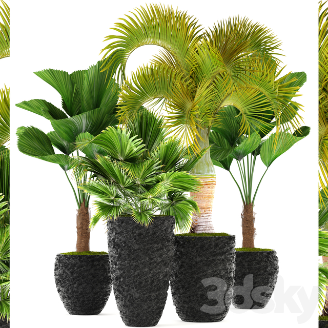 Collection of plants 120. Tropical plants.