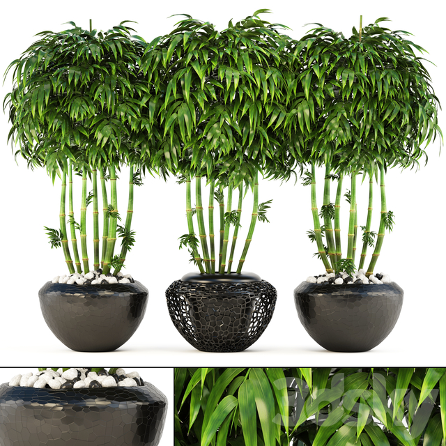 Collection of plants 132. Bamboo Trees