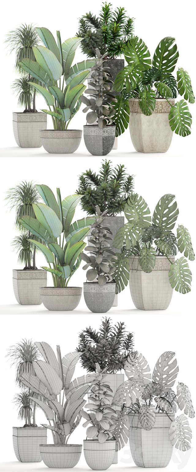 Collection of plants 198
