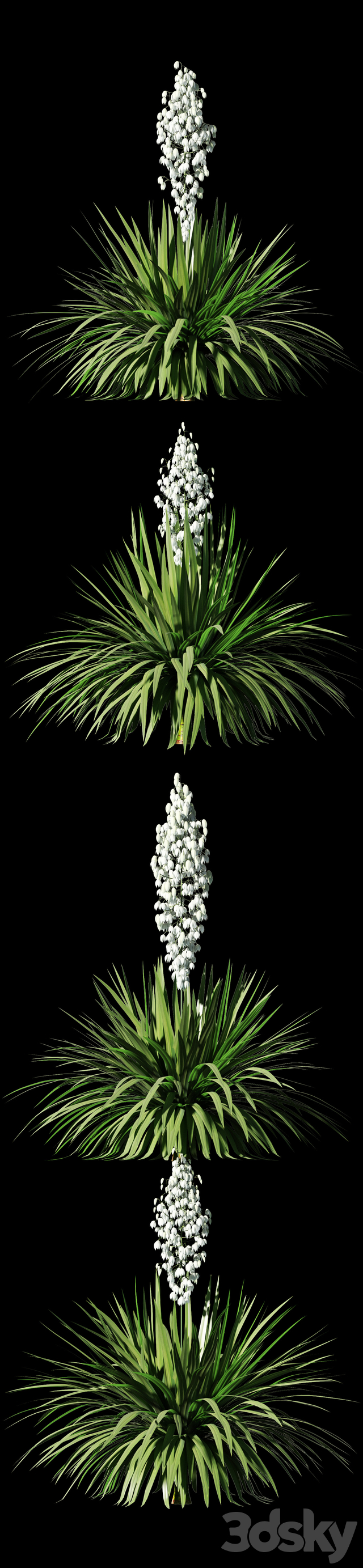 A blossoming yucca. 4 models