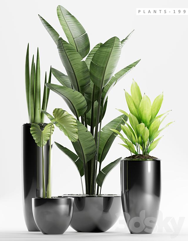PLANTS 199
