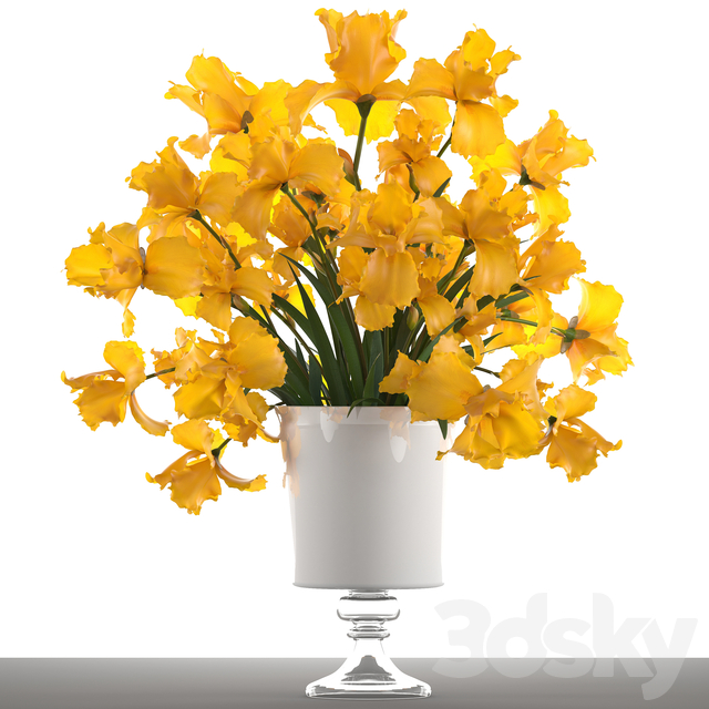 Collection of flowers 47. Yellow Irises.