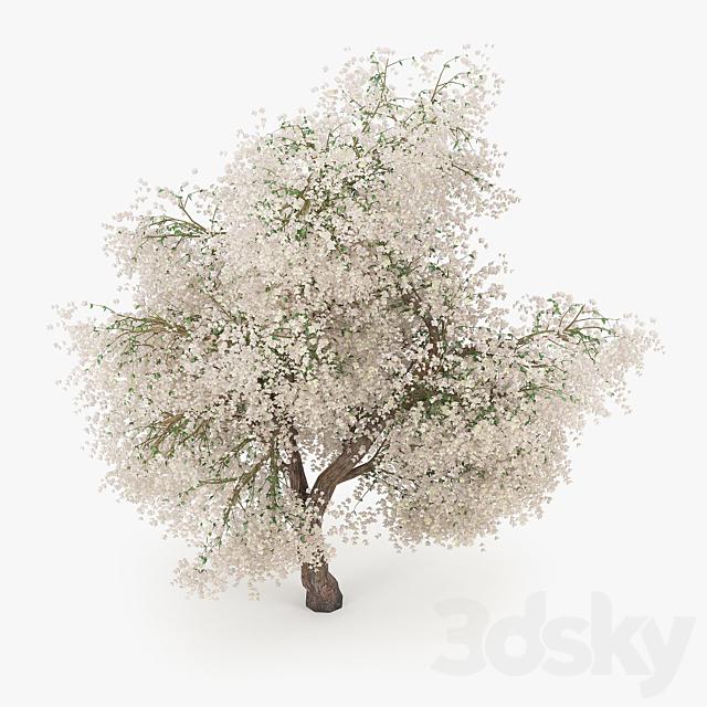 Flowering Apple Tree 2