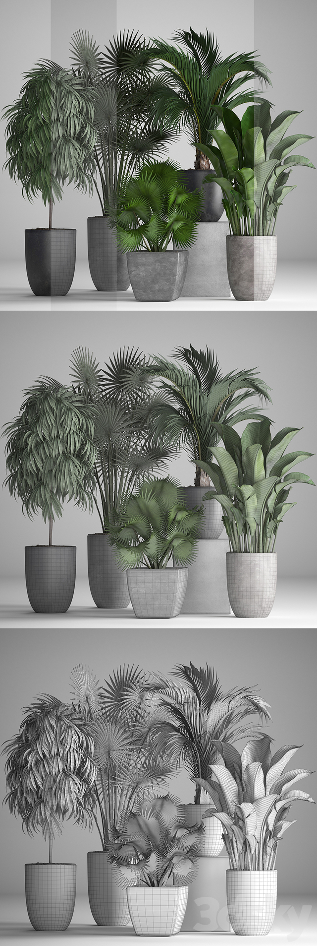 Plant collection 258.