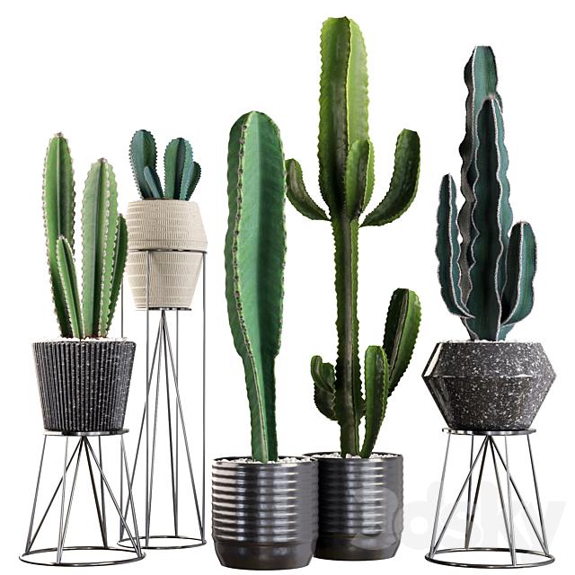 Plants collection 03. Cactus set