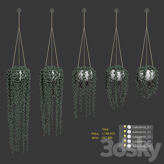Hanging succulents in hanging pots. 5 models