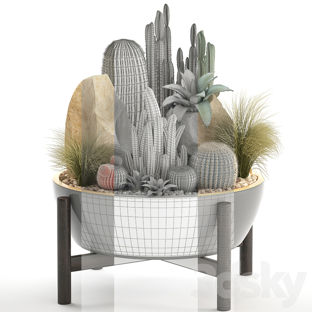 Plant collection 306. Cactus set.