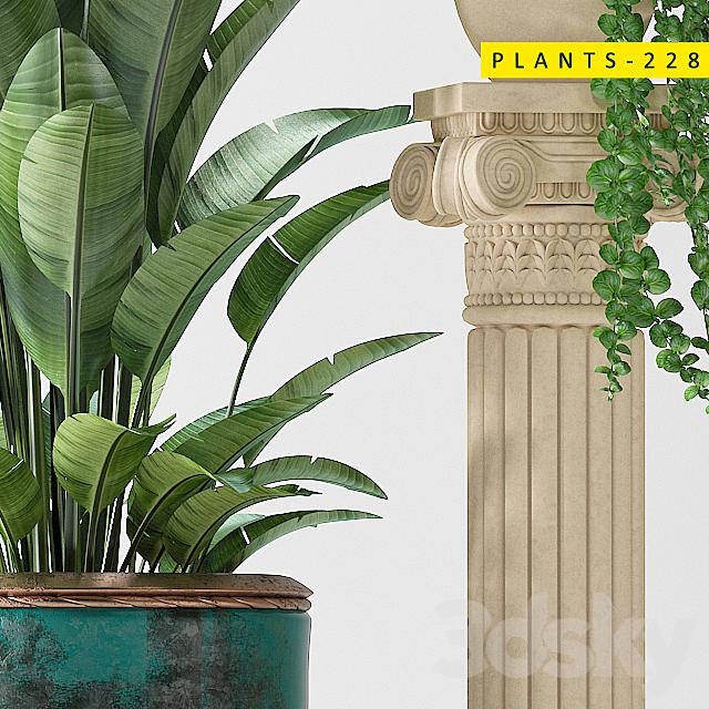 Plants 228