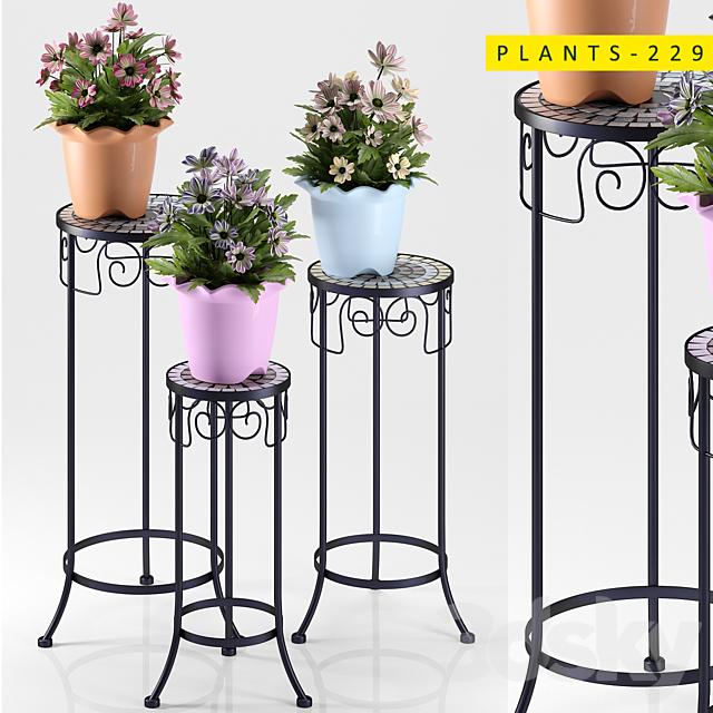 plants 229