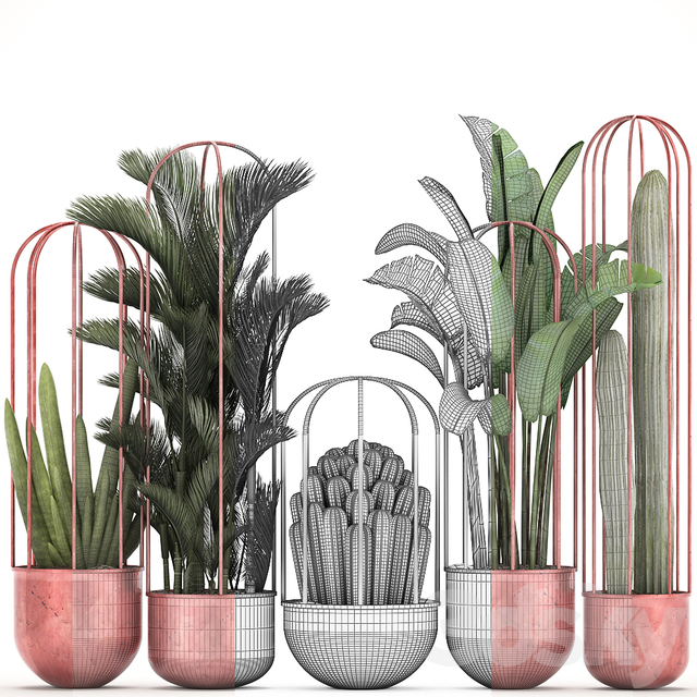 Collection of plants 326.