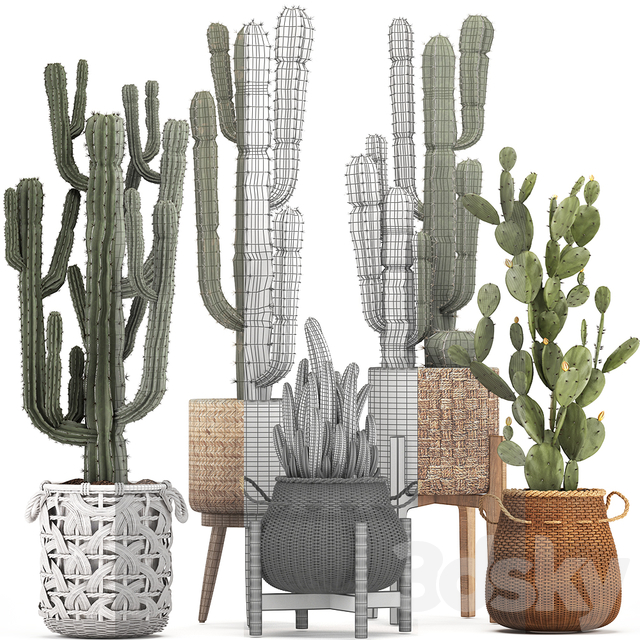 Collection of plants 330.