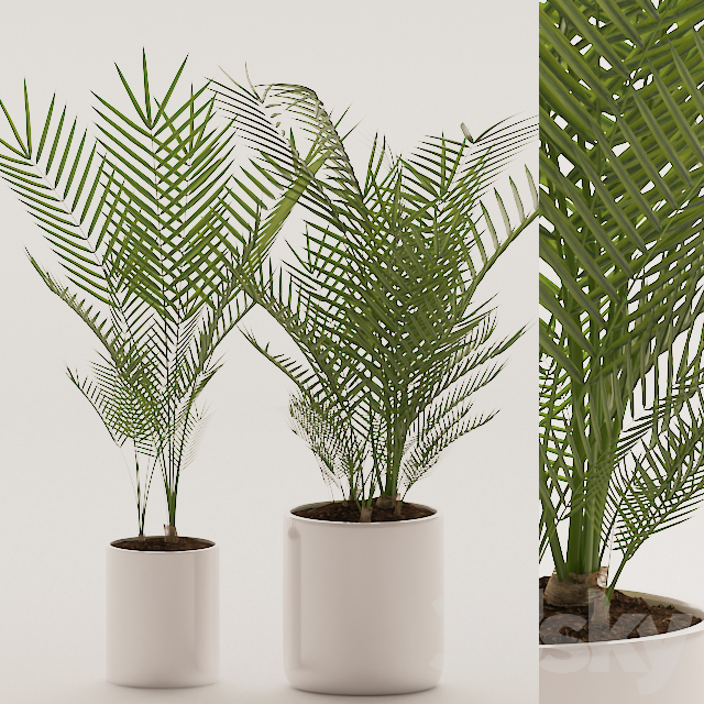 Plants 144