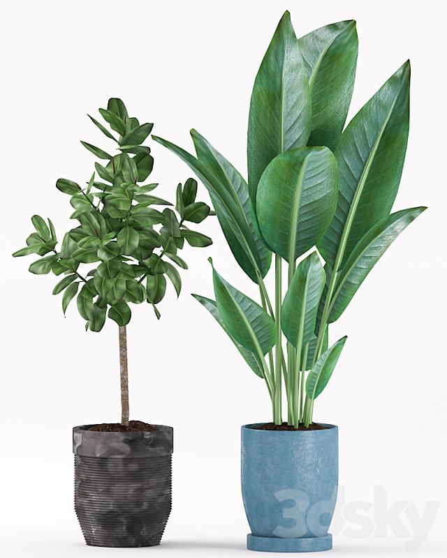 Plants 158
