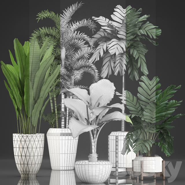 Plant collection 349.