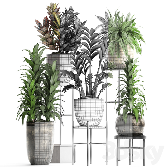 Plant Collection 362.