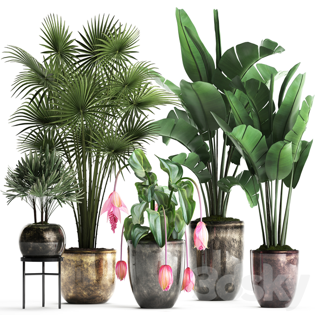Plant Collection 373