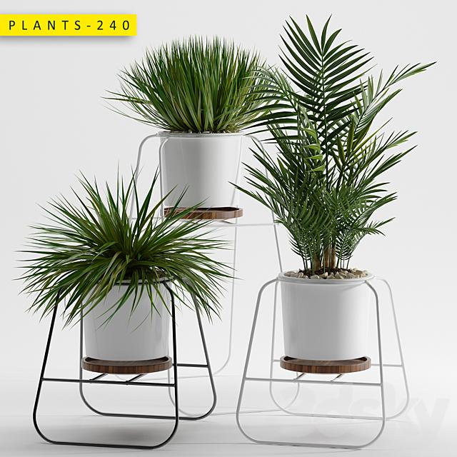 Plants 240
