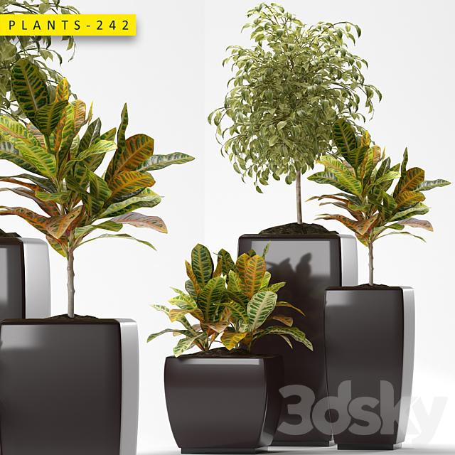 Plants 242