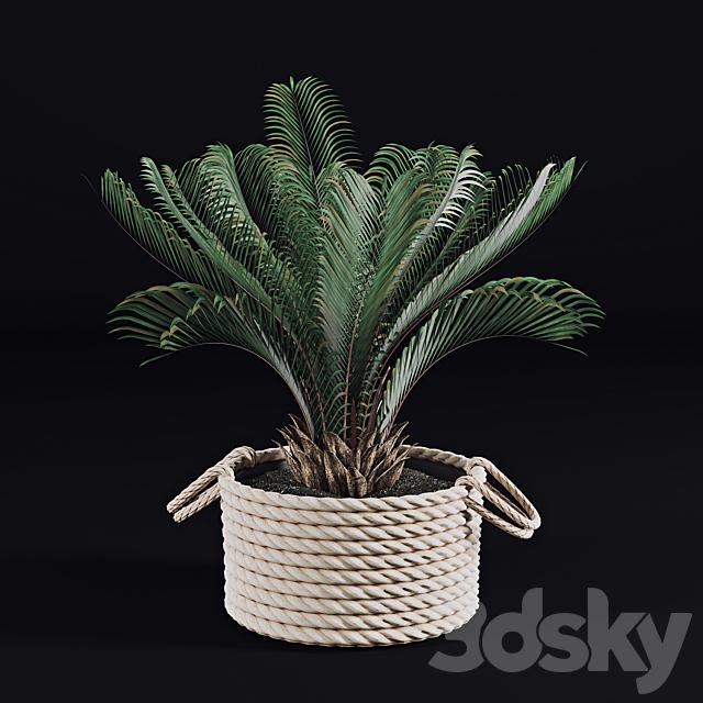 Palms in baskets