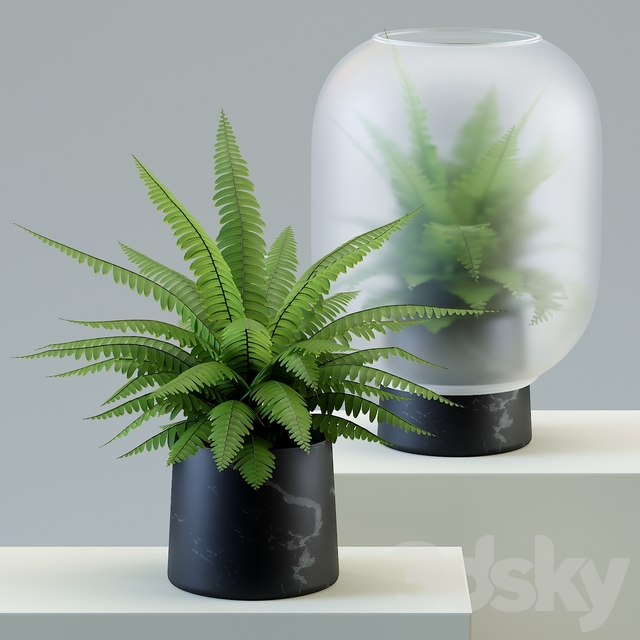 Nebl plant in frosted glass