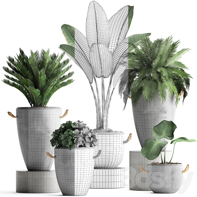 Plant Collection 381.