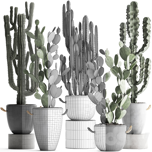 Plant Collection 386.