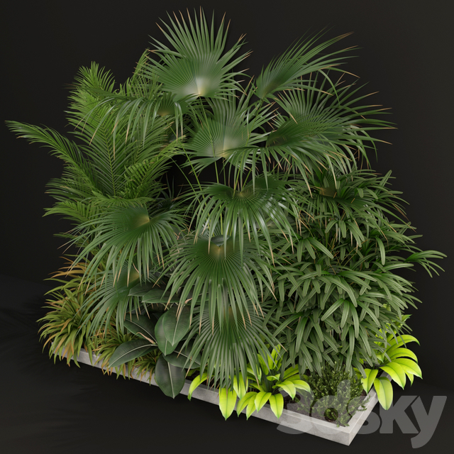 Plants collection 197