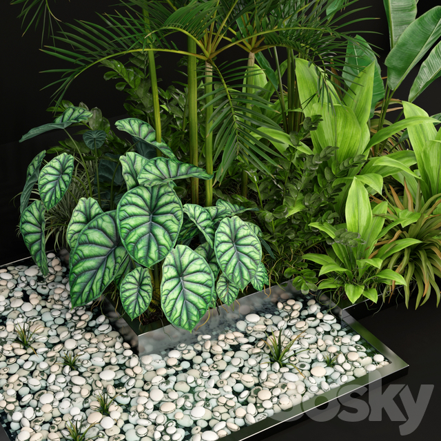 Plants collection 198