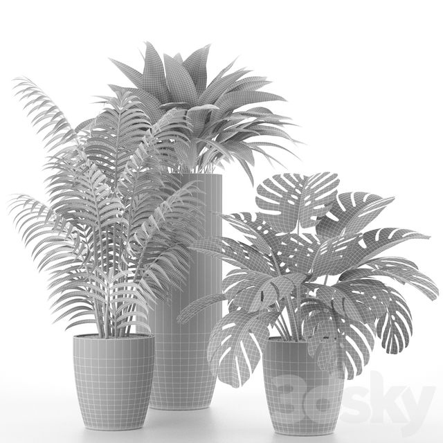 Houseplant Collection 02