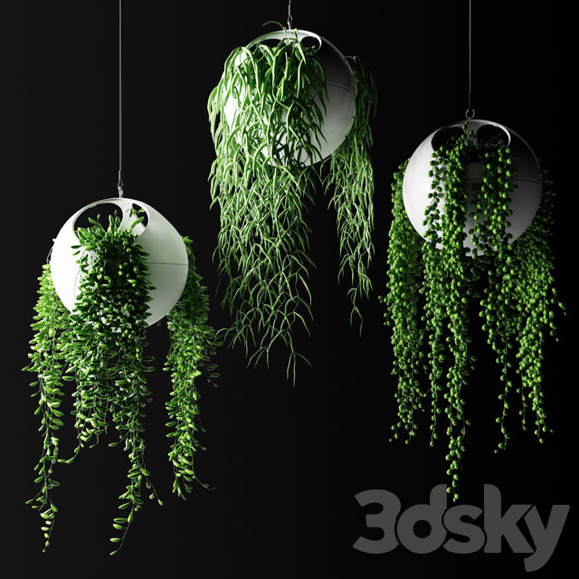 Hanging plants in flower pots | Hanged Plants in spherical hanging planters
